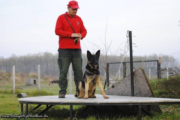 esempio Moschettone Panico Sgancio rapido per cani eurodog