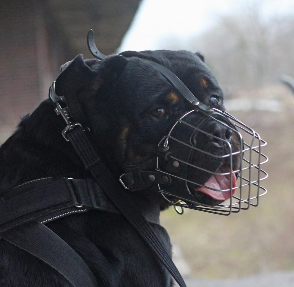 Museruola in filo metallico o cuoio per Addestramento e lavoro di servizio e cani civili