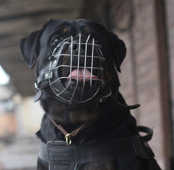 Museruola in Metallo Rinforzata adatta per Rottweiler