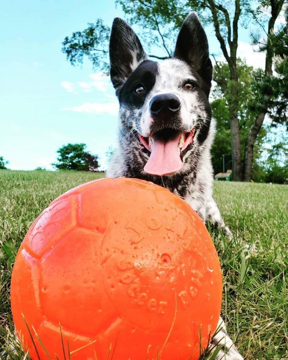 Pallone divertimanto per cani Jolly Soccer Ball Large