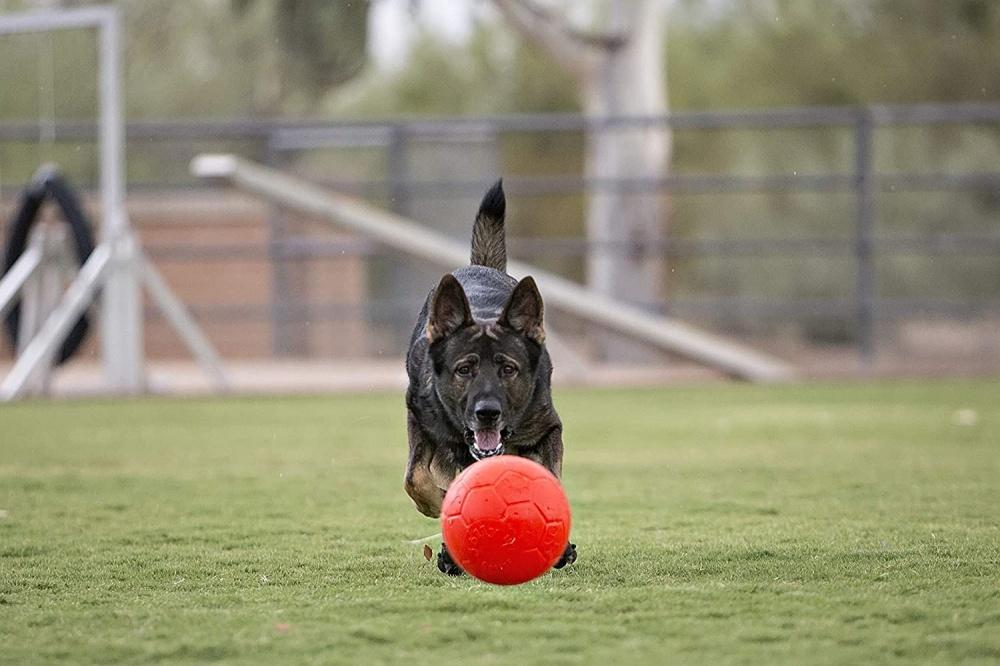 Pallone Jolly Soccer Ball Large per cani